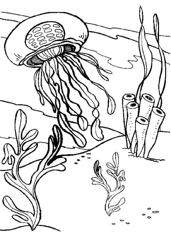 Раскраска Медуза проплывает между водорослей. Скачать Подводный мир, медуза.  Распечатать ,Морские обитатели,