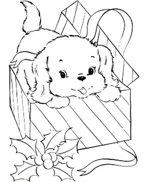 Раскраска Песик с подарочной коробке. Скачать животные, собака, щенок, пес, коробка.  Распечатать ,домашние животные,