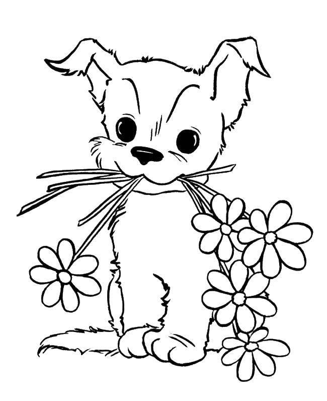 Раскраска Щеночек с цветочками. Скачать животные, собака, щенок, пес, цветочки.  Распечатать ,домашние животные,