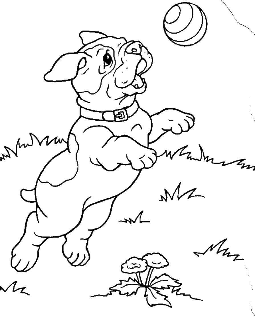 Раскраска домашние животные Скачать Рептилия, черепаха.  Распечатать ,рептилии,