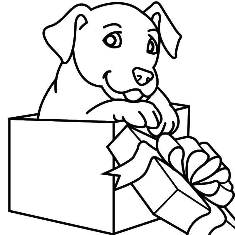 Раскраска Собачка в подарочной коробке. Скачать животные, собачка, песик.  Распечатать ,домашние животные,