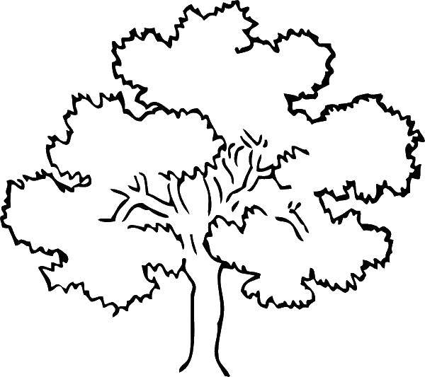 Раскраска Густая листва Скачать Деревья, лист.  Распечатать ,дерево,