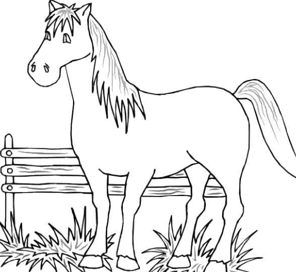Раскраска Лошадка стоит в загоне Скачать Животные, лошадь.  Распечатать ,животные,