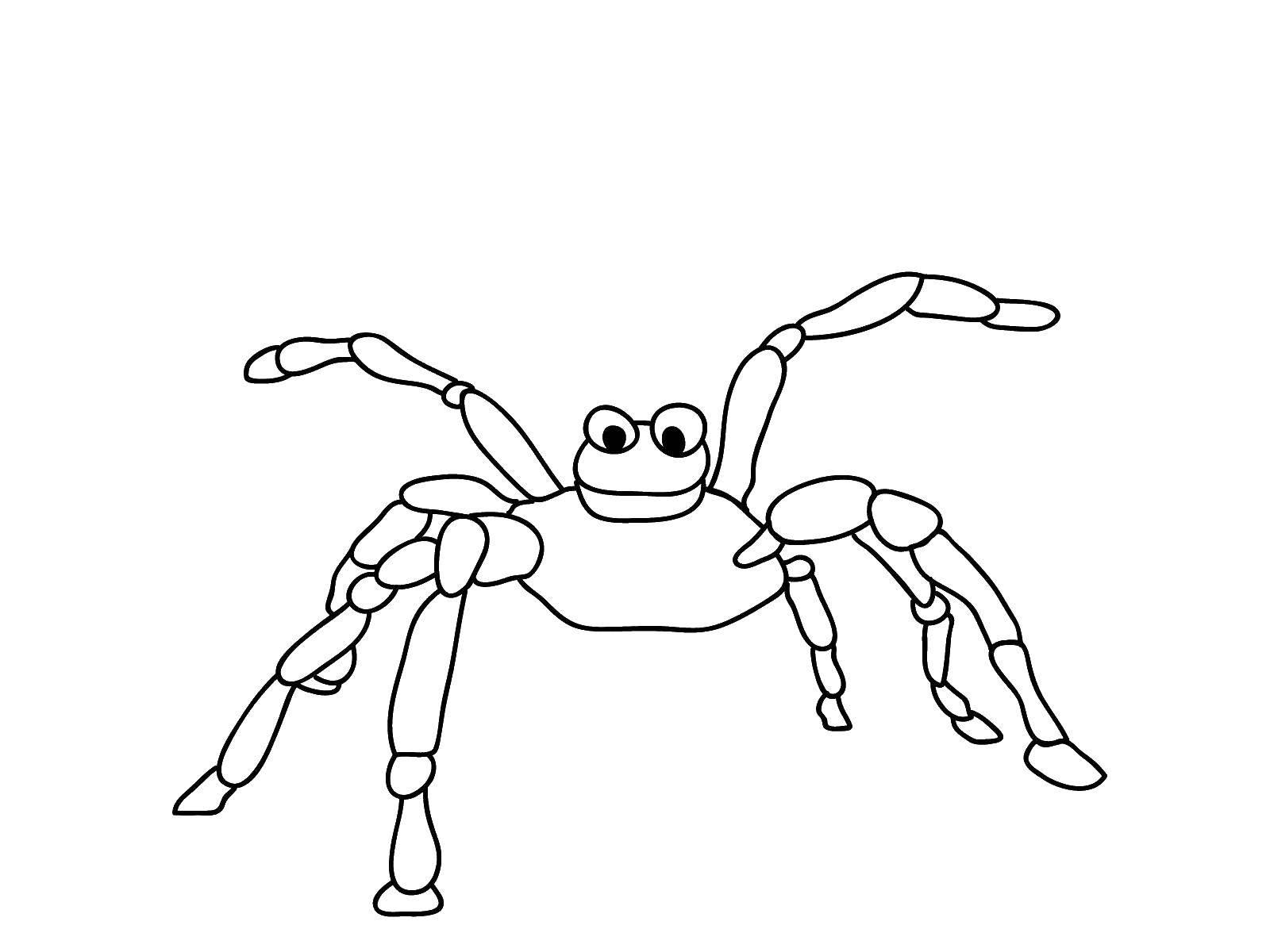 Раскраска пауки Скачать ,Дисней, Утиные Истории, Понка,.  Распечатать