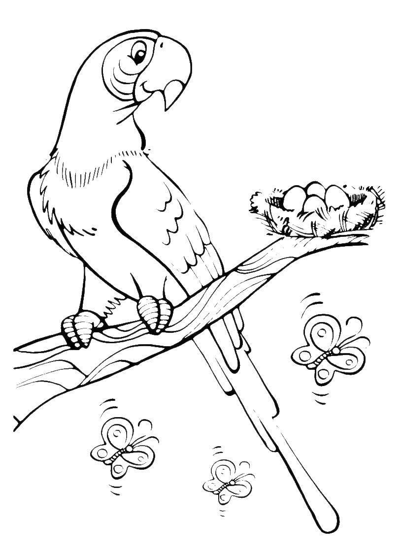 Раскраска попугай Скачать цветы, лепестки.  Распечатать ,цветы,