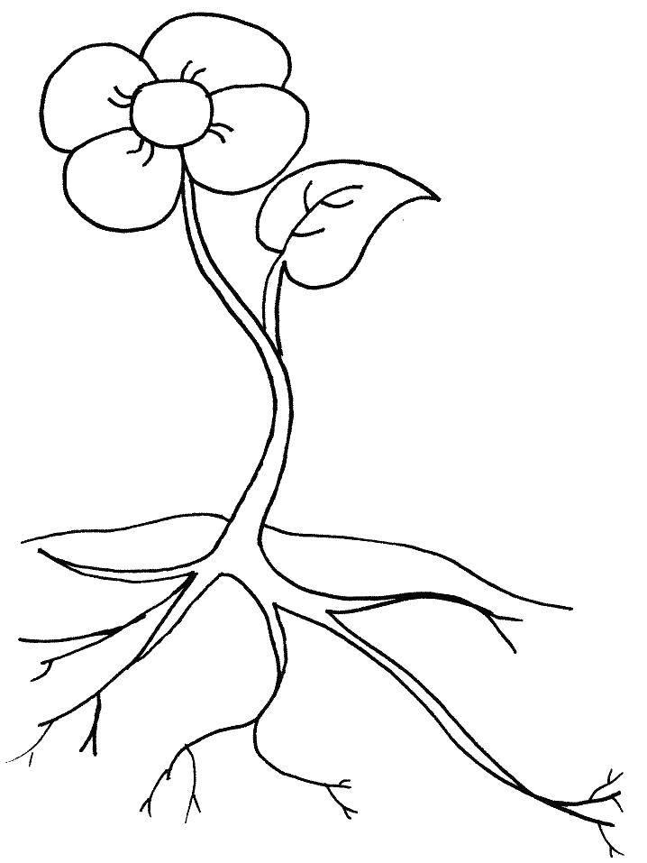 Раскраска Цветок пустил корни Скачать Цветы.  Распечатать ,цветы,