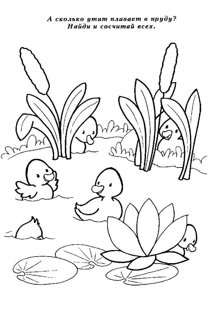 Раскраска Утята в пруду Скачать утята, пруд.  Распечатать ,Обучающие раскраски,
