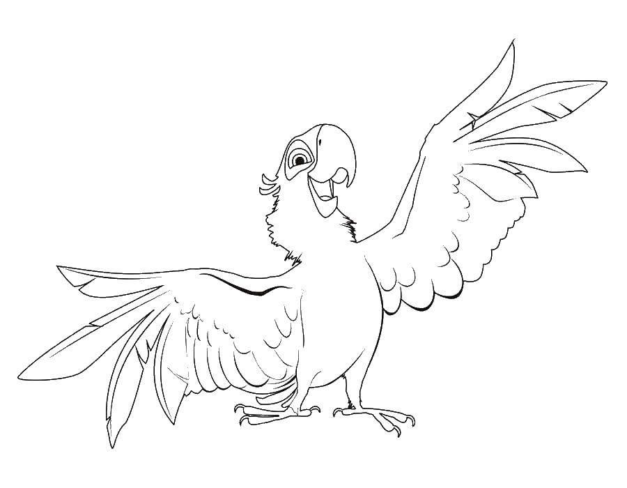 Раскраска попугай Скачать Рептилия, черепаха.  Распечатать ,Морская черепаха,