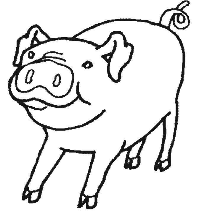 Раскраска Закрученный хвостик свинки Скачать Животные, свинка.  Распечатать ,Контур свиньи для вырезания,
