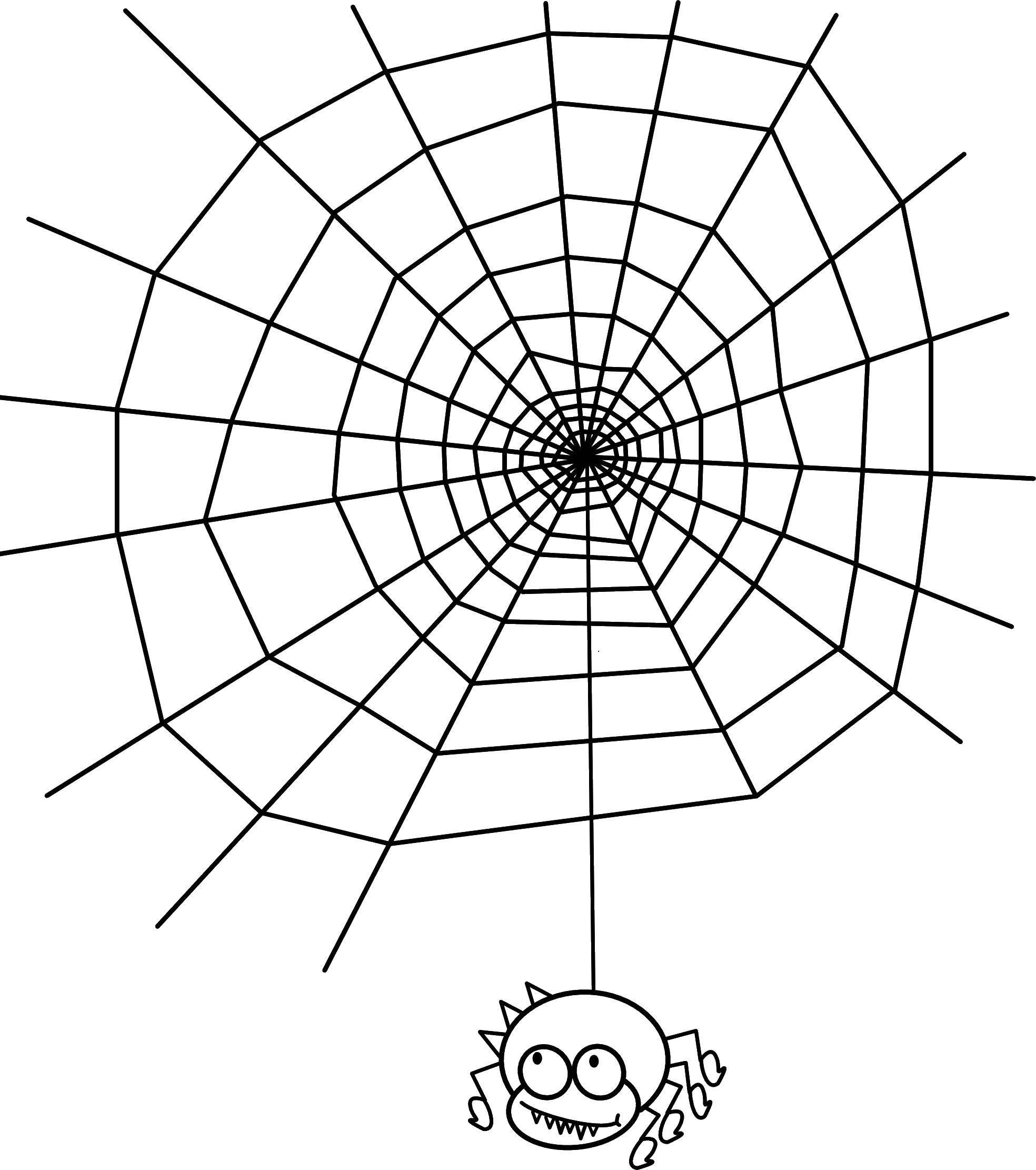 Раскраска пауки Скачать ,паук, паутина, насекомое,.  Распечатать