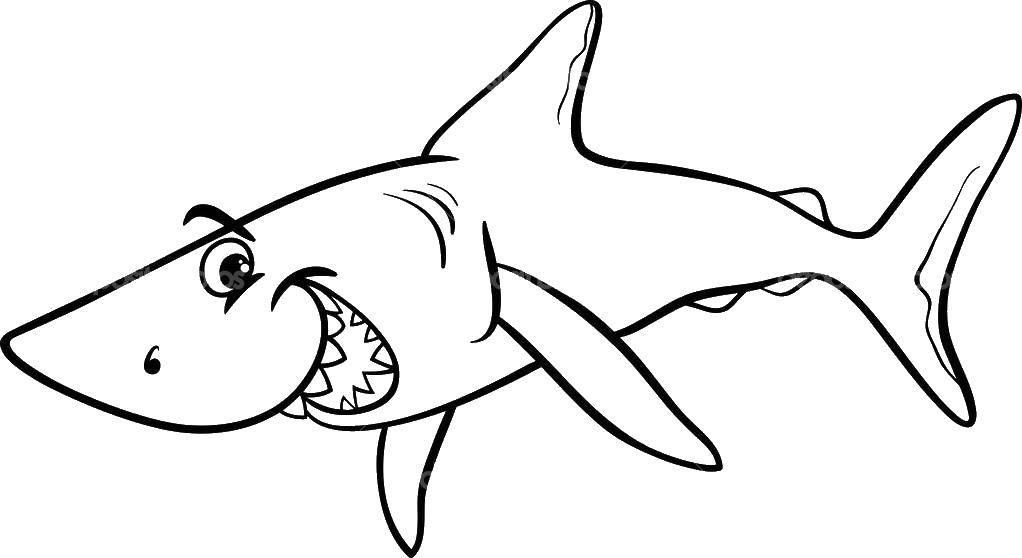 раскраски акула раскраска счастливая акула морское