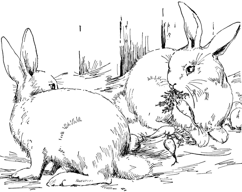 Раскраска Кролики кушают морковку Скачать кролик, заяц.  Распечатать ,кролик,