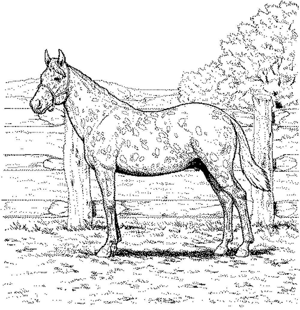 Раскраска Пятнистая лошадка Скачать Лошадь.  Распечатать ,лошади,