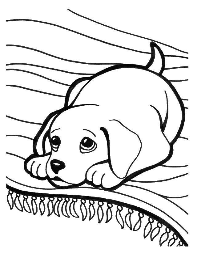 Раскраска Пёсик на подушечке. Скачать Животные, собака.  Распечатать ,Животные,