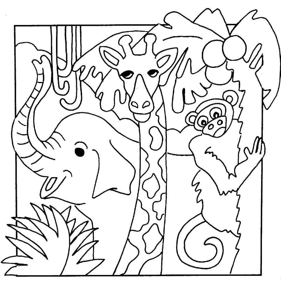 Раскраска дикие животные Скачать .  Распечатать