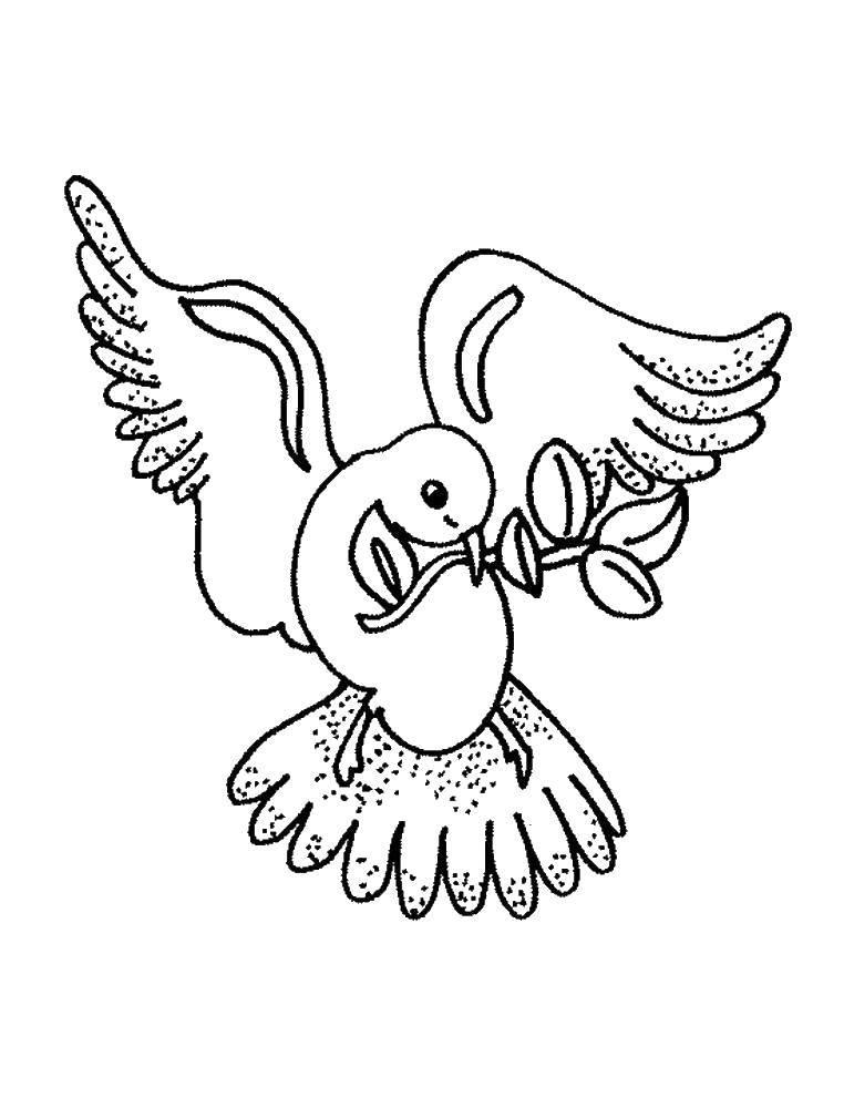 Раскраска Голубь с веточкой в клюве Скачать птицы, голуби.  Распечатать ,голубь мира,