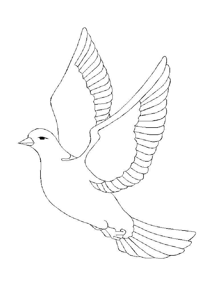 Раскраска Голубь в небе Скачать голубь, птичка.  Распечатать ,голубь мира,