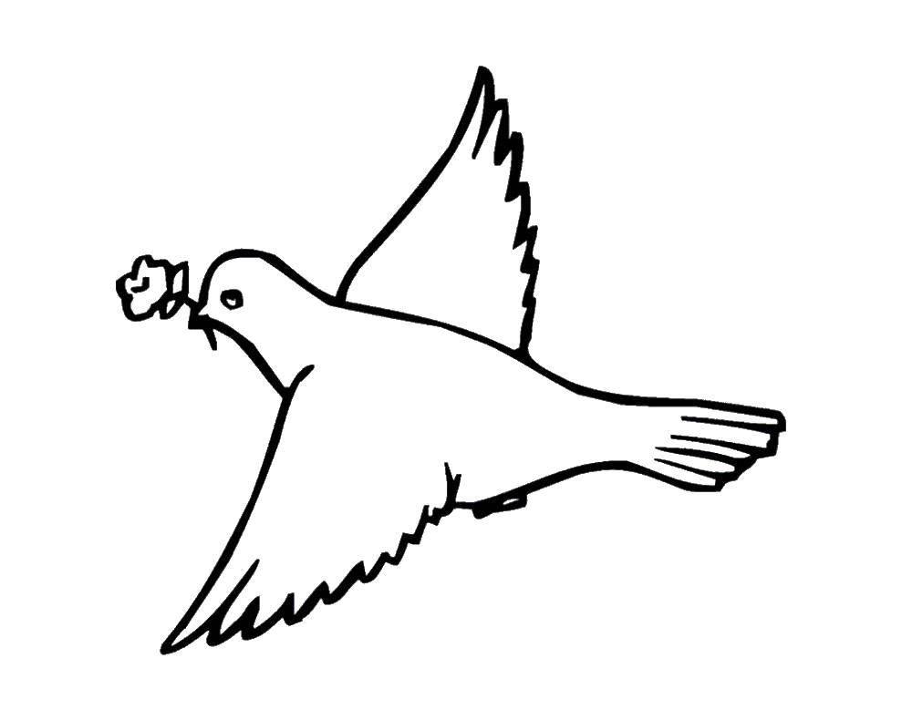 Раскраска Голубок с цветочком Скачать голуби, цветочек, птицы.  Распечатать ,голубь мира,