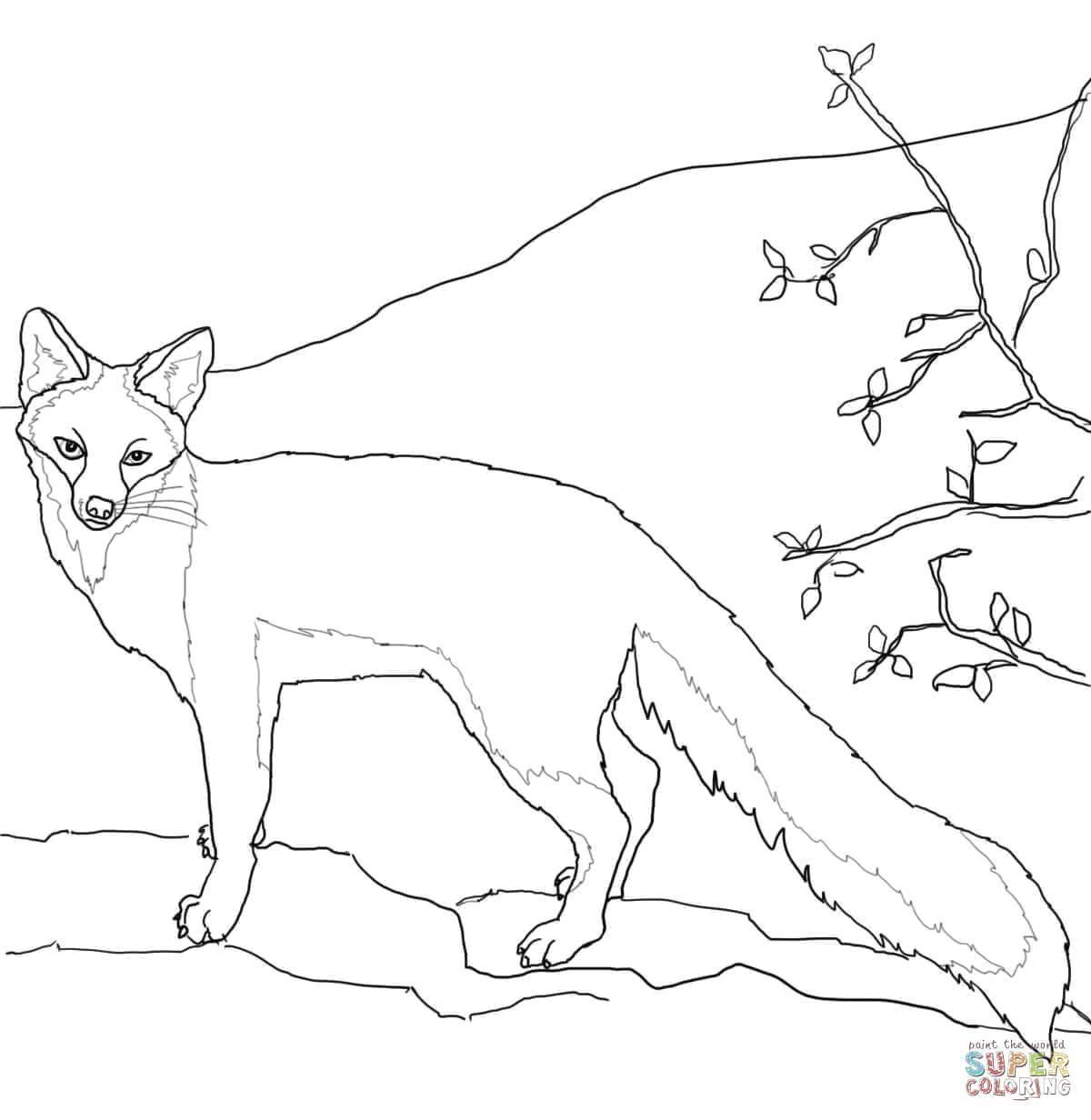 Раскраска Горная лисица Скачать Животные, лиса.  Распечатать ,Лисица,