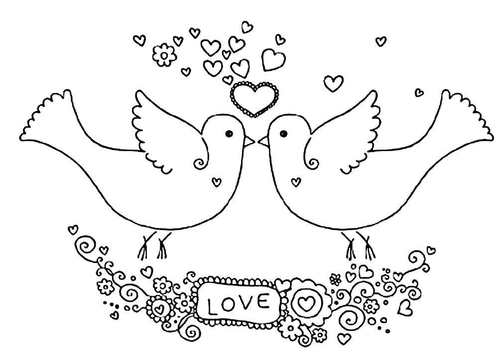 Раскраска Любовь голубков Скачать птицы, голуби, любовь.  Распечатать ,голубь мира,