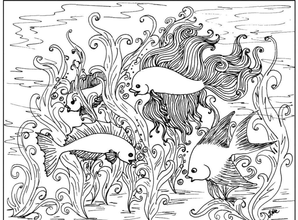 Раскраска Мир золотых рыбок Скачать Подводный мир, рыба.  Распечатать ,морское,