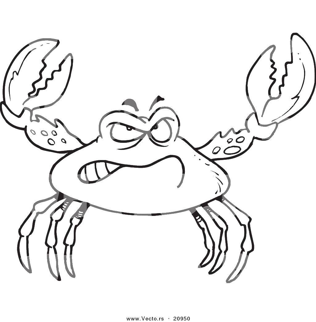 Раскраска Злой краб Скачать морские обитатели, морские животные, крабы.  Распечатать ,Краб,