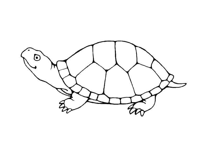 Раскраска Короткие лапки черепахи Скачать Рептилия, черепаха.  Распечатать ,Морская черепаха,