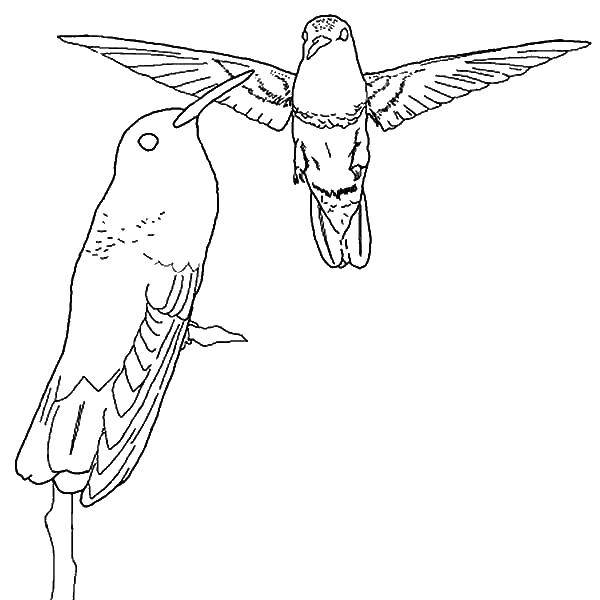 Раскраска птицы Скачать единорог, крылья, корона.  Распечатать ,раскраски,