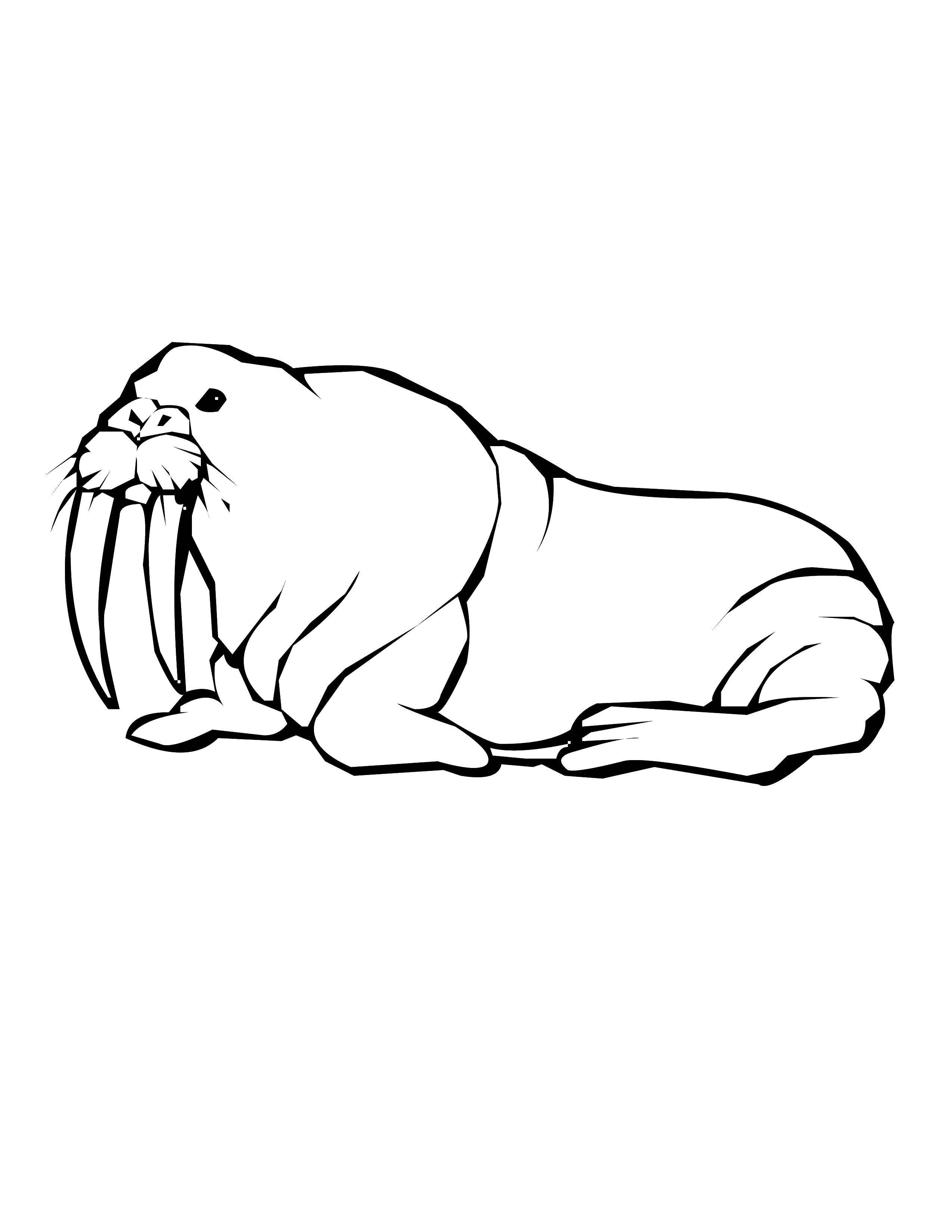 раскраски отдыхе раскраска морж на отдыхе животные