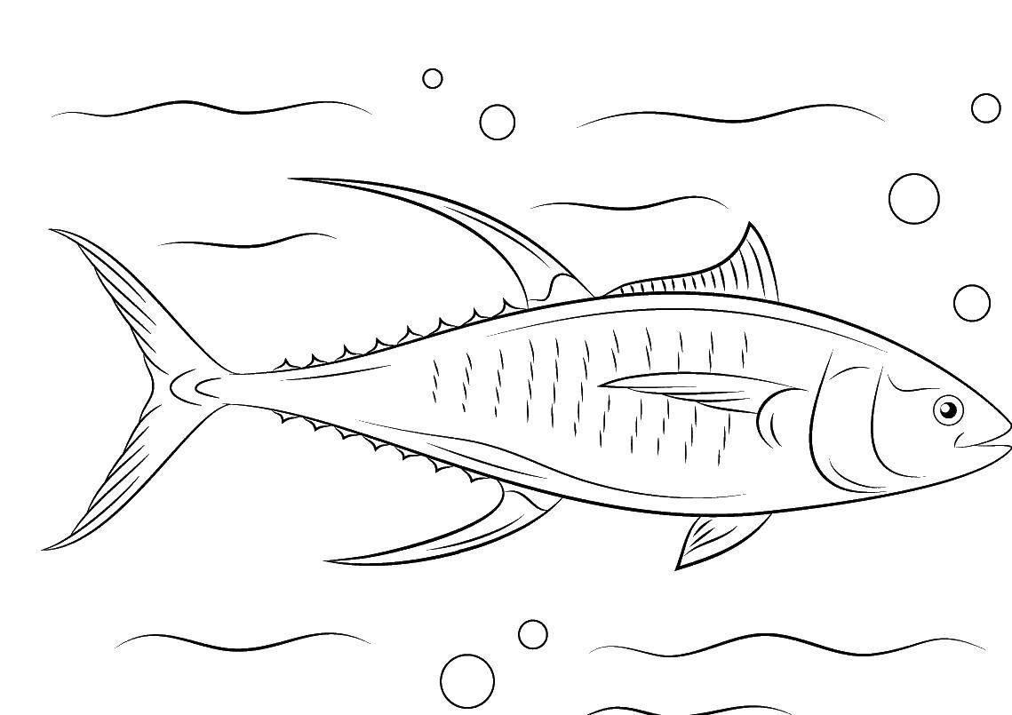 Название: Раскраска Тунец под водой. Категория: раскраски. Теги: Подводный мир, рыба.