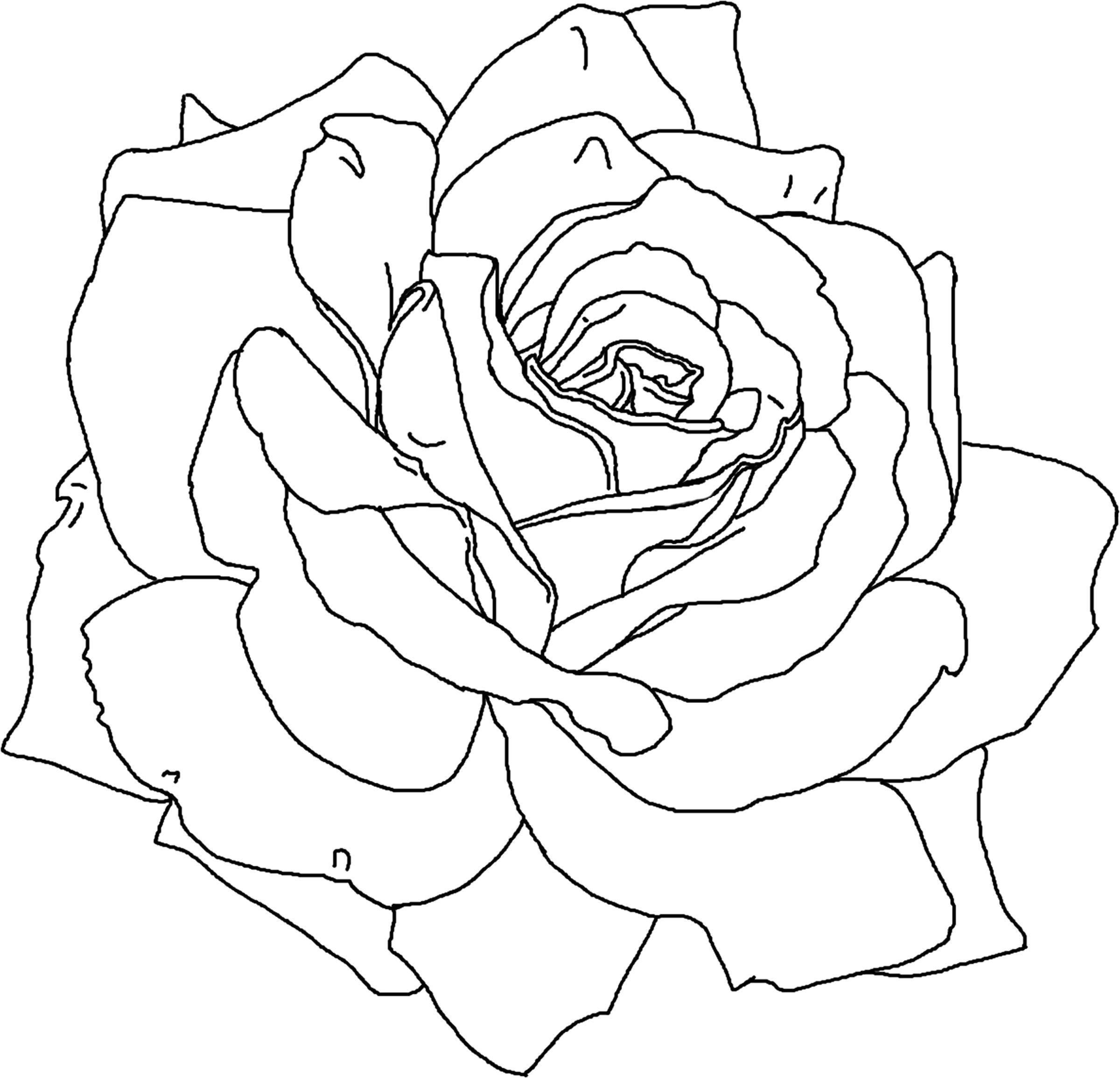 Раскраска Красивая роза Скачать Цветы, розы.  Распечатать ,цветы,