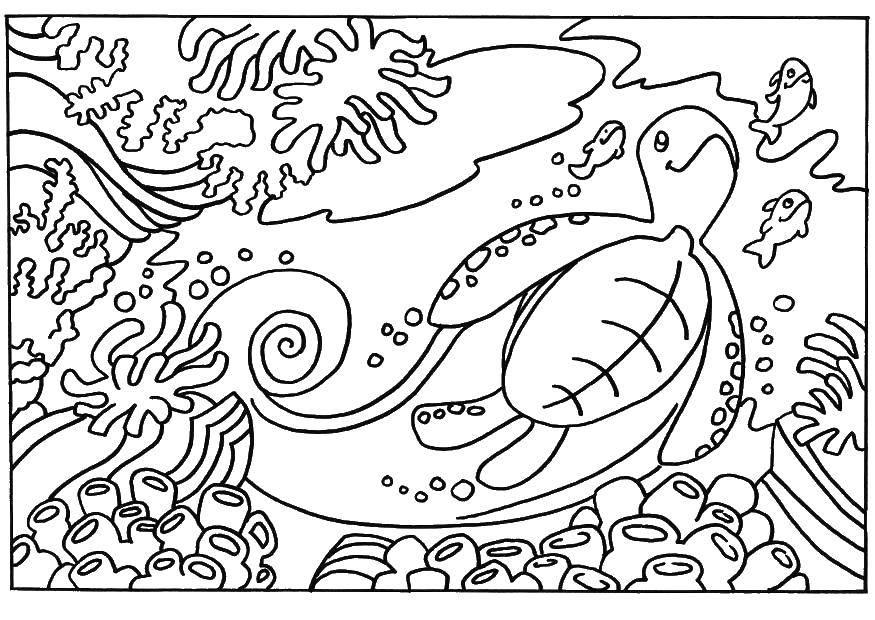 Раскраска Подводный мир, черепаха Скачать Рептилия, черепаха.  Распечатать ,Морская черепаха,
