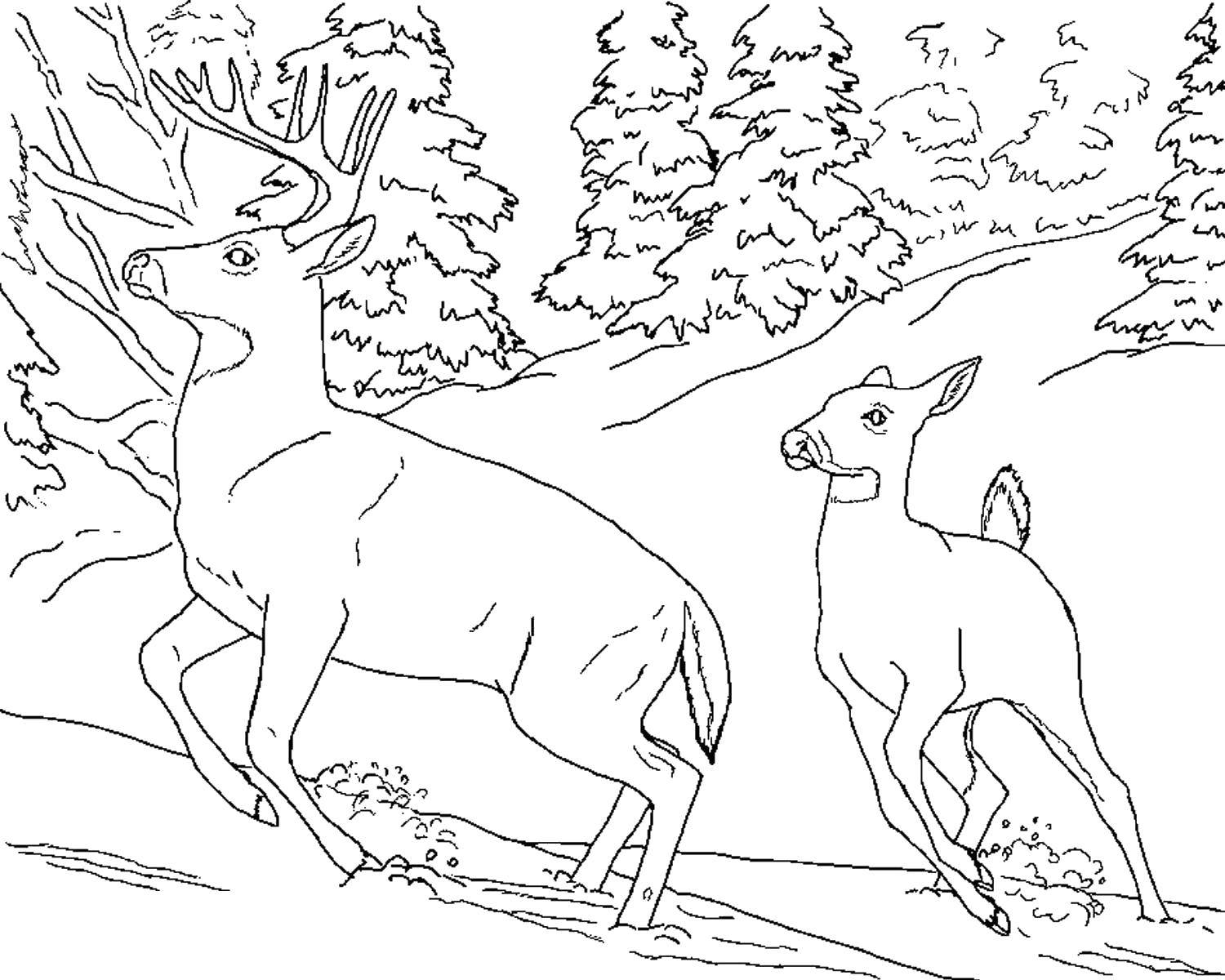 Coloring deer run away from a predator category the forest tags nature