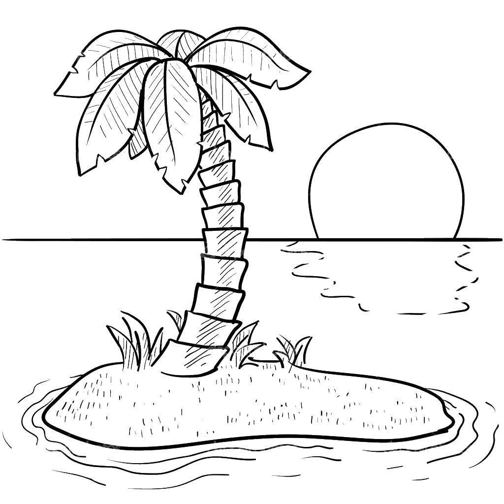 Раскраска остров Скачать ,Деревья, пальма,.  Распечатать