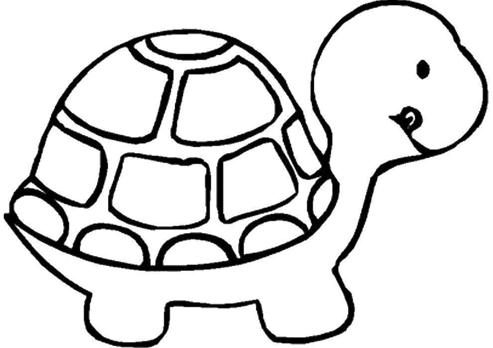 Раскраска черепаха Скачать большой динозавр.  Распечатать ,динозавр,