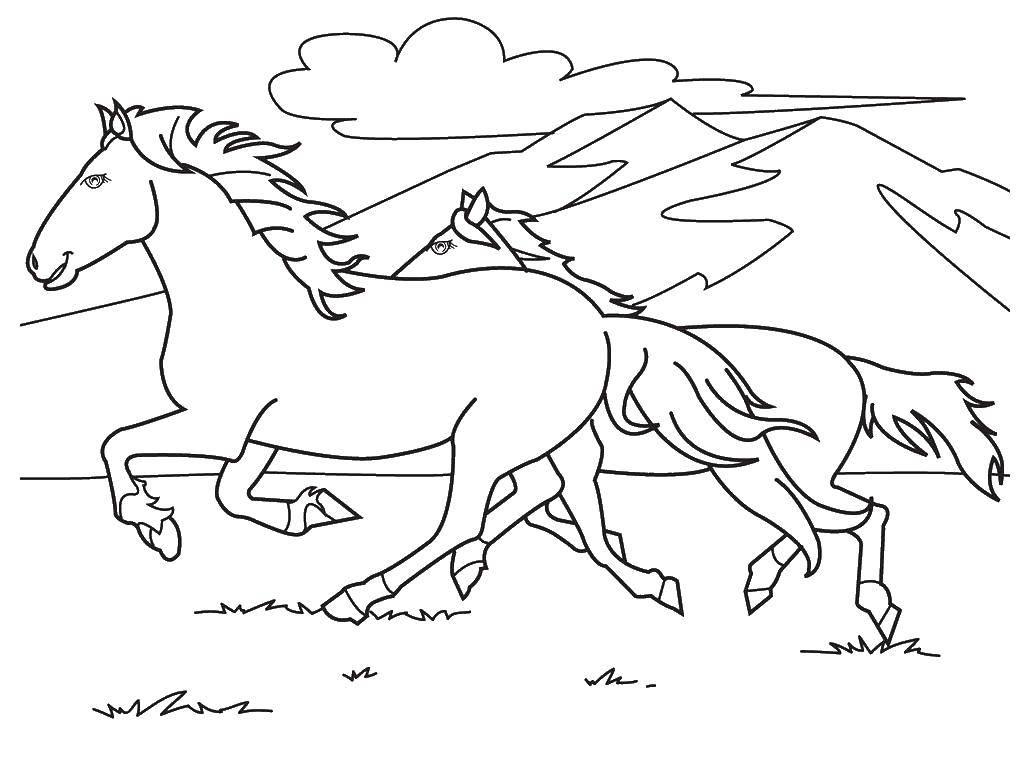 Раскраска Две скачущие лошади Скачать лошади, кони, лошадки.  Распечатать ,лошади,
