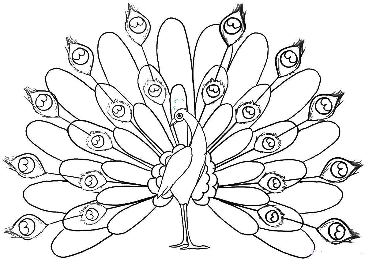 Раскраска Красивые перья хвоста павлина Скачать Птицы, павлин.  Распечатать ,птицы,