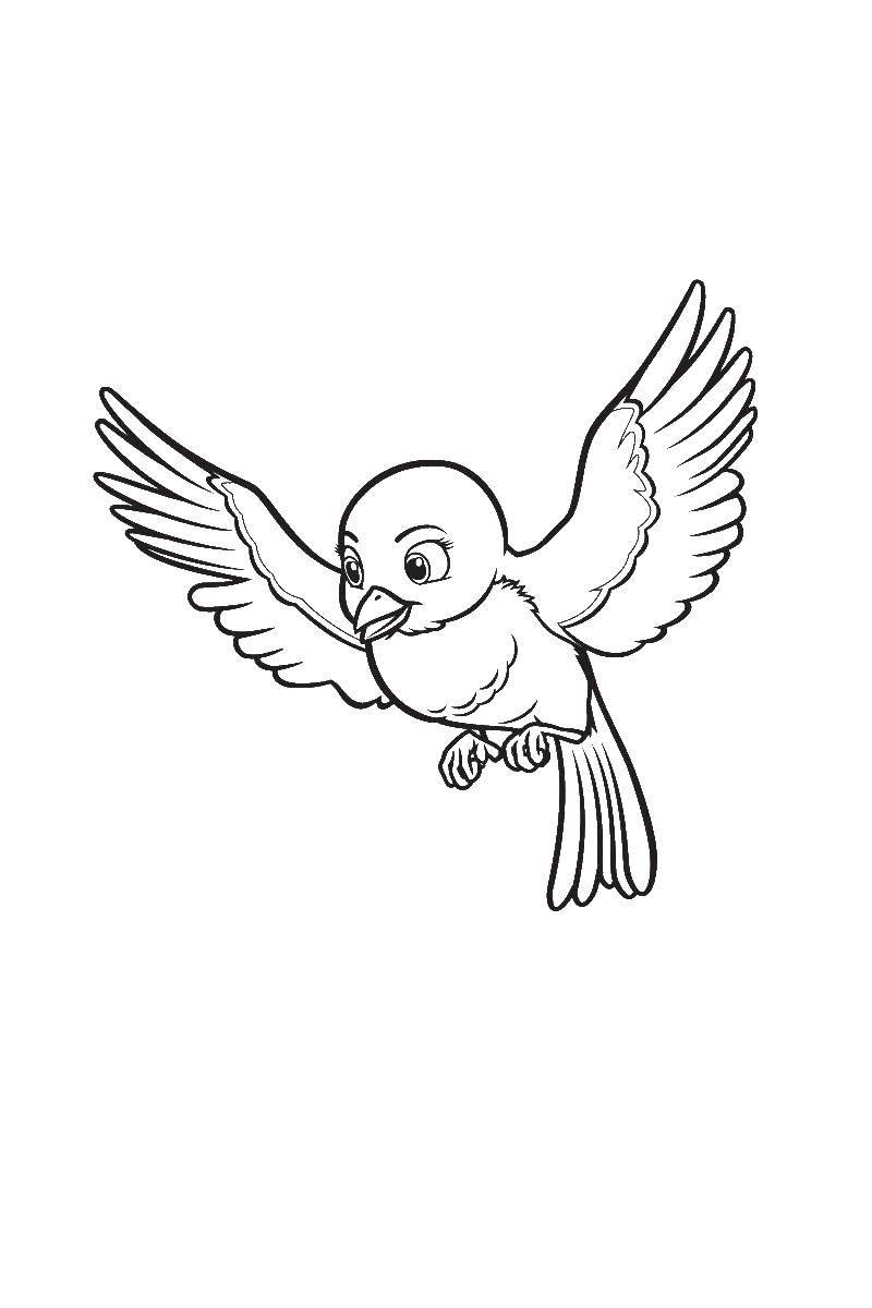 Раскраска Птицы робин Скачать птицы Робин, принцесса софия.  Распечатать ,принцесса софия,