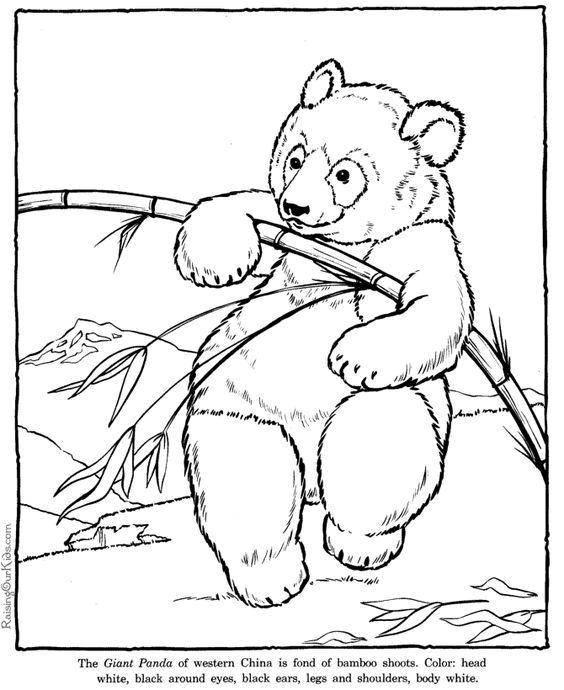 Раскраска Китайский панда с бамбуком Скачать животные, панда, Китай.  Распечатать ,животные,