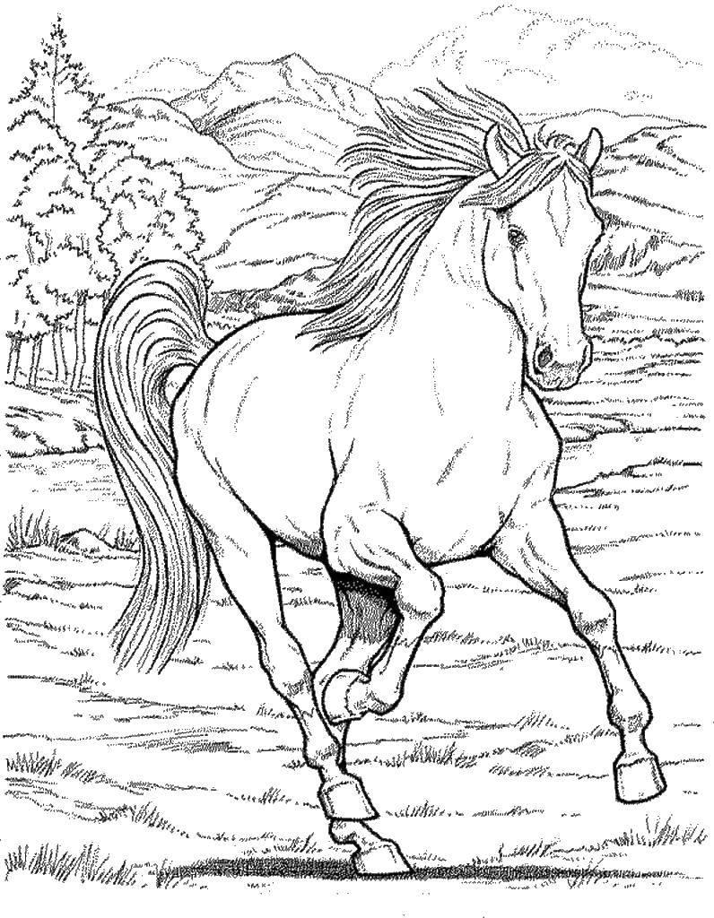 Раскраска Лошадка бежит по полю Скачать Животные, лошадь.  Распечатать ,Животные,
