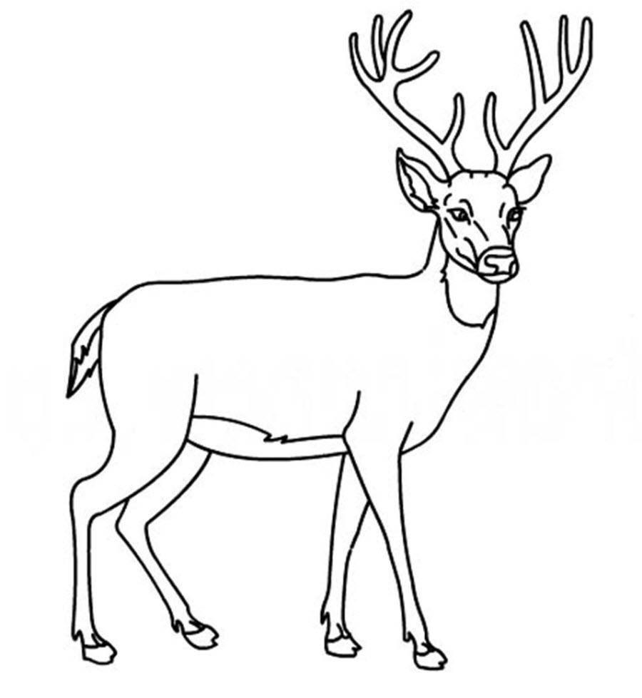 Раскраска Рисунок оленя с рогами Скачать Олень.  Распечатать ,домашние животные,