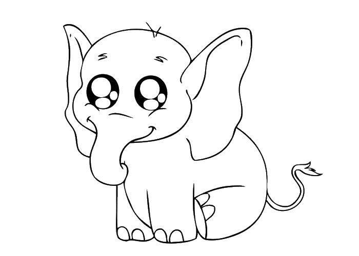 Раскраска Слоненок с милыми глазками Скачать животные, слоны, слоненок.  Распечатать ,Животные,