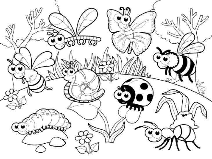 Раскраска Все насекомые в сборе Скачать Насекомые.  Распечатать ,Насекомые,