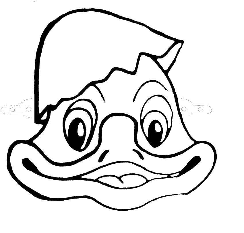 Название: Раскраска Утка с корлупой на голове. Категория: птицы. Теги: птица, утка.