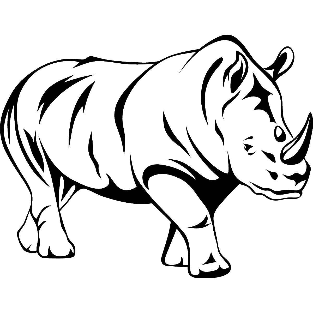 Раскраска Крупный носорог Скачать Животные, носорог.  Распечатать ,Животные,