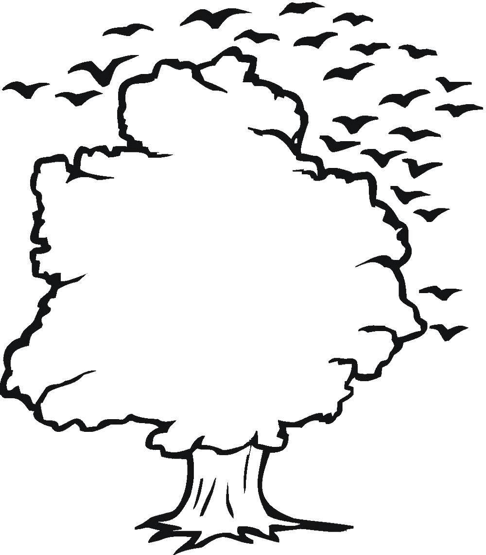Раскраска Птицы над деревом Скачать Деревья, лист.  Распечатать ,дерево,