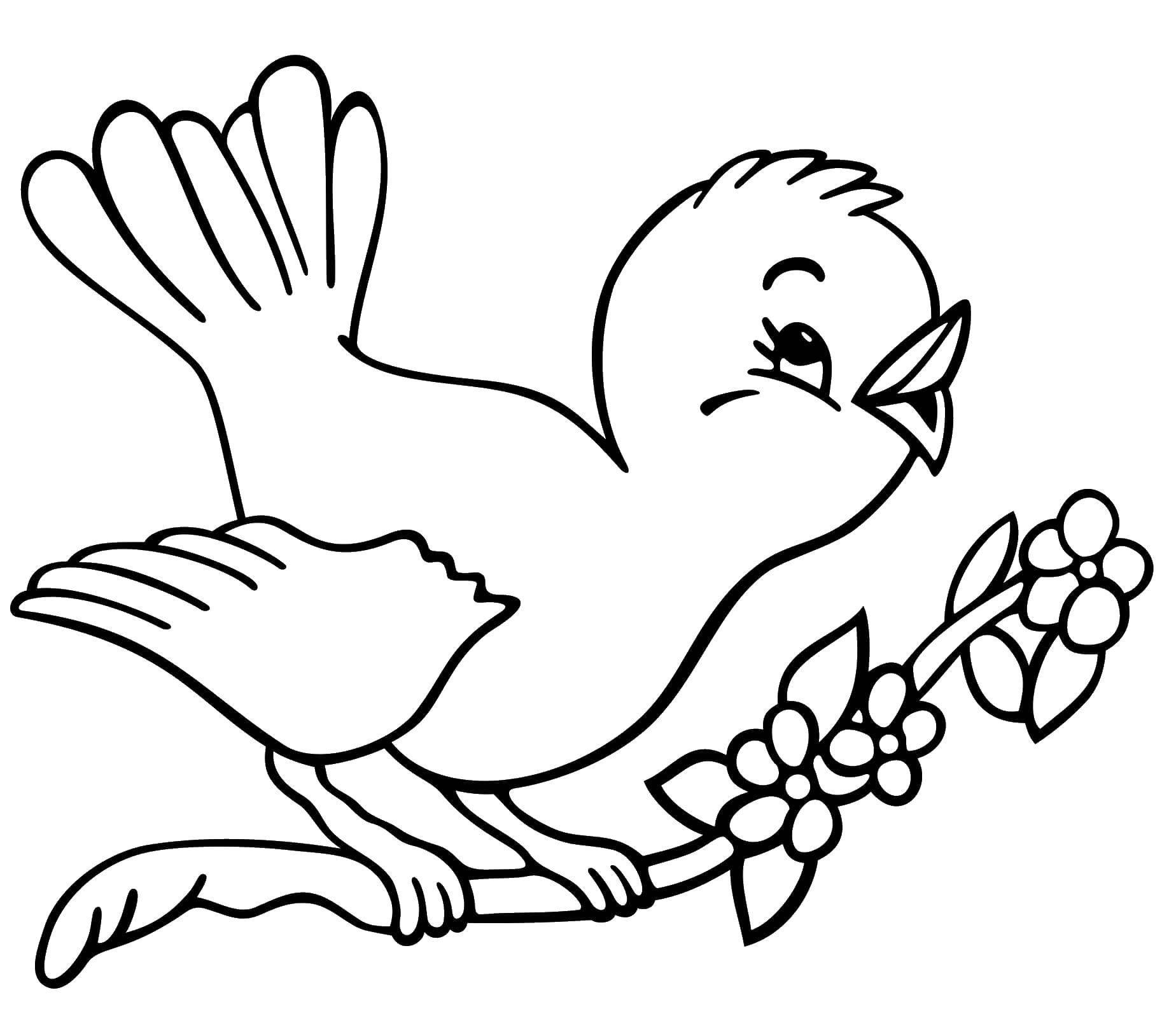 Раскраска Птичка поёт на ветке. Скачать Птицы.  Распечатать ,птицы,