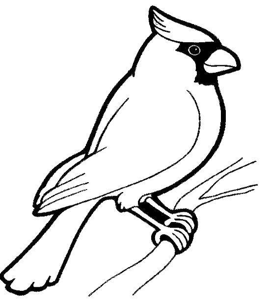 Раскраска Весёлый дятел Скачать Птицы.  Распечатать ,птицы,