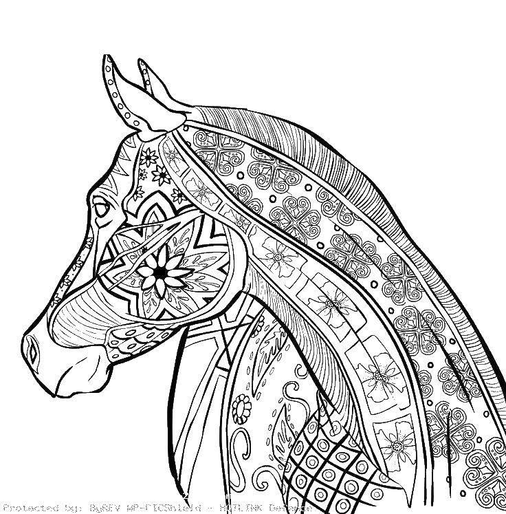 Раскраска Конь в узорах Скачать антистресс, узоры, конь, лошади.  Распечатать ,Антистресс,