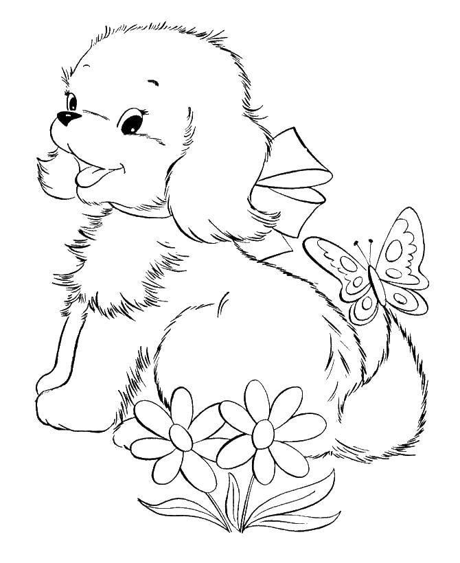 Раскраска Собачка с бантиком, цветы. бабочка Скачать животные, собака, щенок, пес.  Распечатать ,домашние животные,
